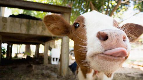 federatia-nationala-pro-agro-cere-actualizarea-situatiei-referitoare-la-numarul-de-bovine
